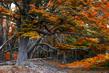 woodscapes3/DSC_0898