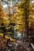 woodscapes3/DSC_0900