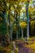 woodscapes3/DSC_0902
