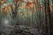 woodscapes3/DSC_0903D