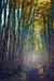 woodscapes3/DSC_0905B