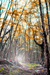 woodscapes3/DSC_0908