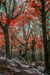 woodscapes3/DSC_0909