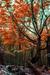 woodscapes3/DSC_0910