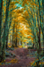 woodscapes3/DSC_0919A