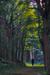 woodscapes3/DSC_0922C