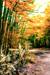 woodscapes3/DSC_0925