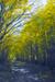 woodscapes3/DSC_0926