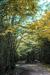woodscapes3/DSC_0927